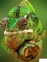 Roaming Reptiles - Reptile Parties