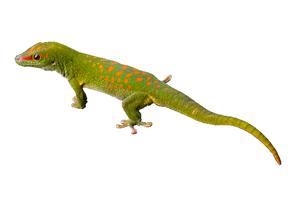 Roaming Reptiles Lizards - Reptile Parties